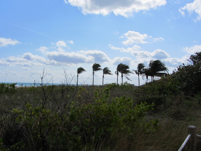 Miami Beach_verde