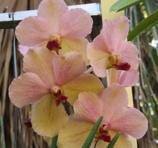 orhidee 3