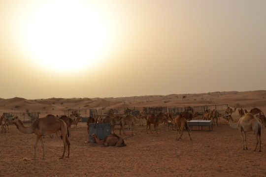 Dubai_Desert safari 24