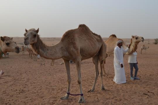Dubai_Desert safari 25