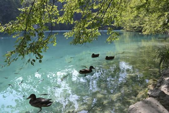 Croatia Plitvice 31