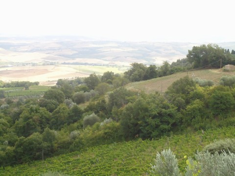 Toscana 31