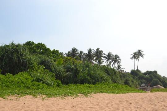 Sri Lanka_Bentota 15