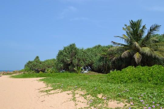 Sri Lanka_Bentota 16