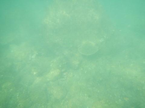 SL_snorkeling Bentota 18