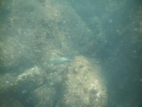 SL_snorkeling Bentota 23