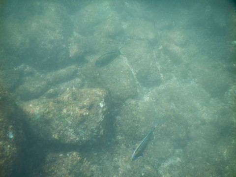 SL_snorkeling Bentota 29