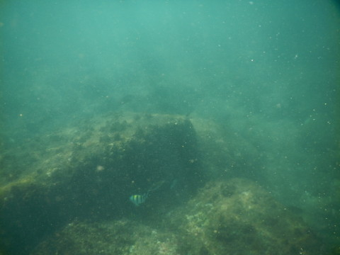 SL_snorkeling Bentota 30