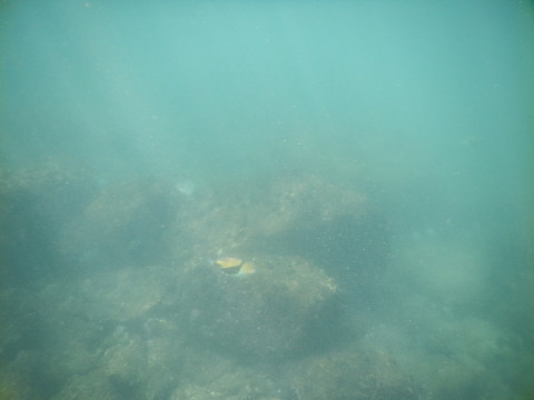 SL_snorkeling Bentota 32