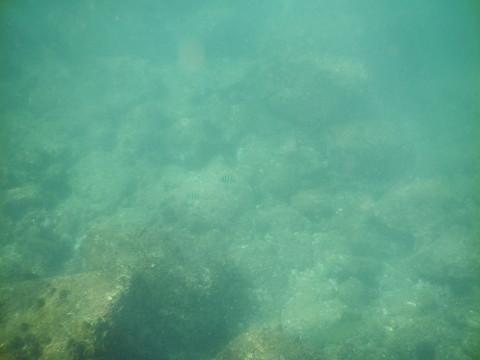 SL_snorkeling Bentota 34