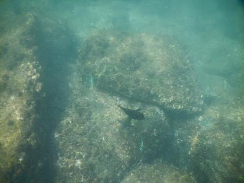SL_snorkeling Bentota 37