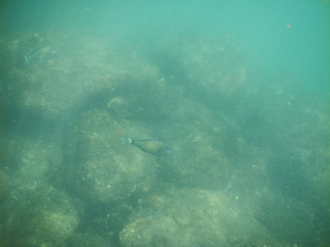 SL_snorkeling Bentota 38