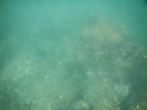 SL_snorkeling Bentota 39