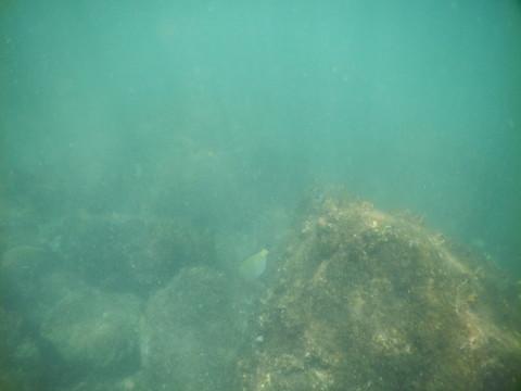 SL_snorkeling Bentota 40