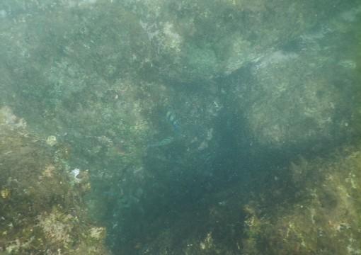 SL_snorkeling Bentota 41