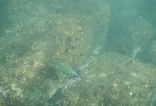 SL_snorkeling Bentota 43