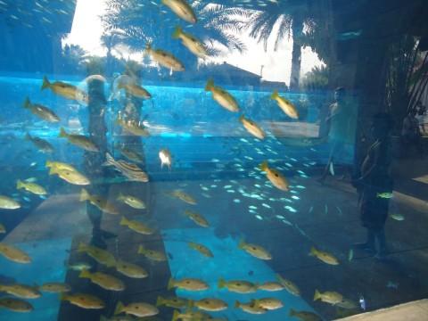 Dubai_Atlantis 35