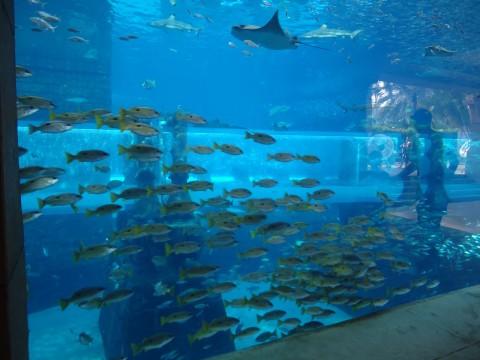 Dubai_Atlantis 36