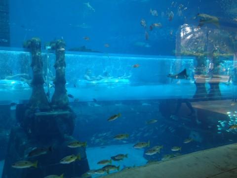 Dubai_Atlantis 37