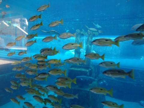 Dubai_Atlantis 40