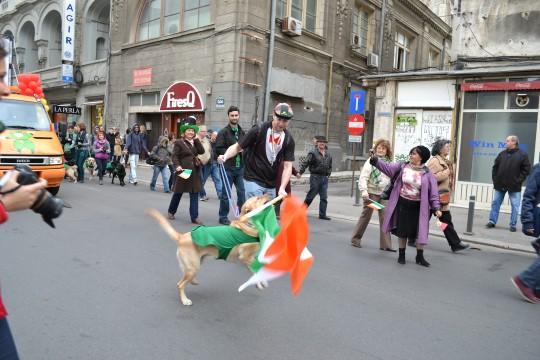 St Patrick's Day 2014_25