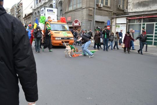 St Patrick's Day 2014_26