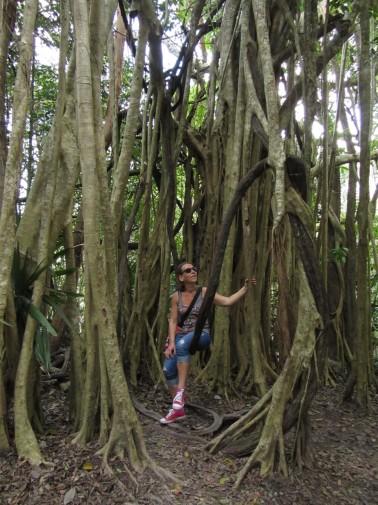 Caraibe_Tulum_coba jungle 2