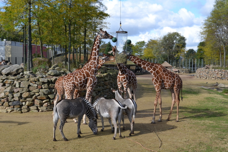 Amsterdam Zoo 5