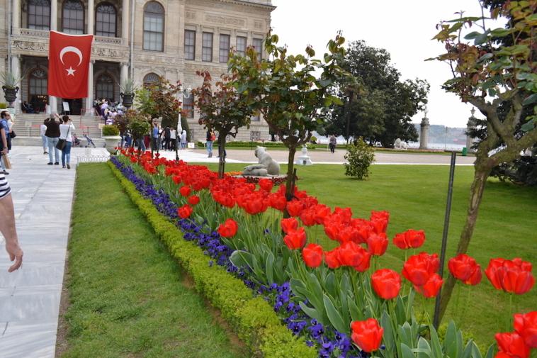 Istanbul lalele 19