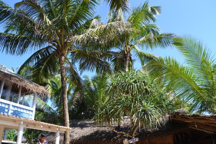 Sri Lanka_Hikkaduwa 14