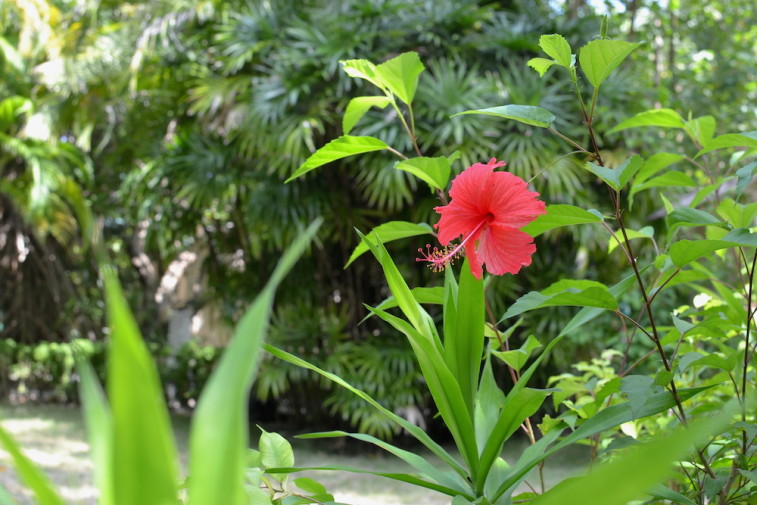 Maldive_culori 37