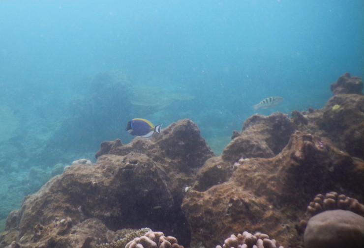 Maldive_culori 63