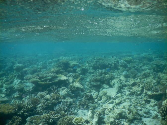 Maldives_snorkeling ocean_10
