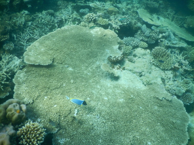 Maldives_snorkeling ocean_14