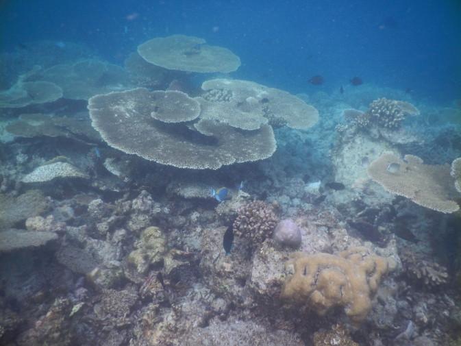 Maldives_snorkeling ocean_18