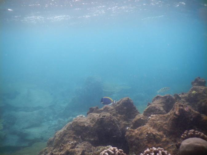 Maldives_snorkeling ocean_19