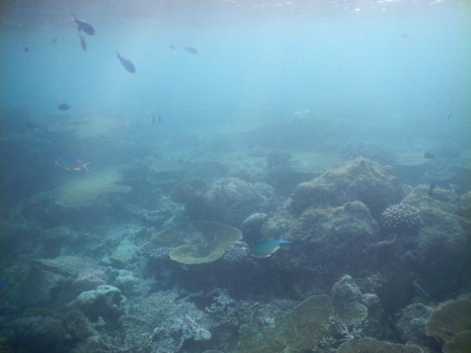 Maldives_snorkeling ocean_24