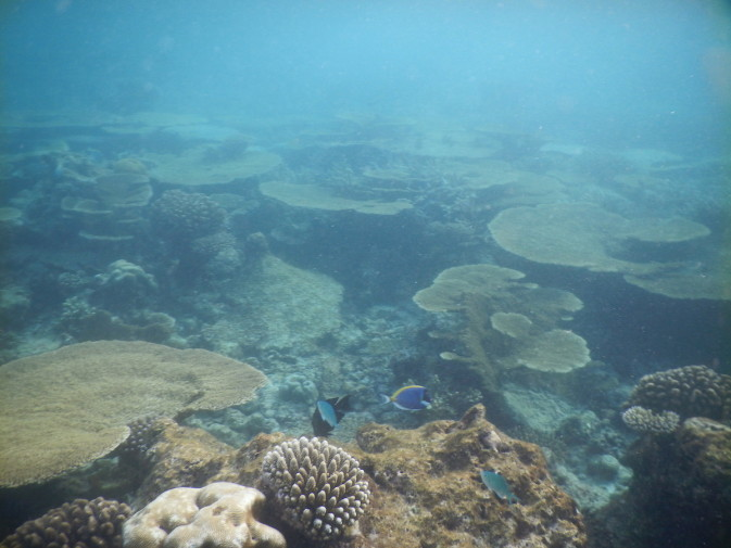 Maldives_snorkeling ocean_26