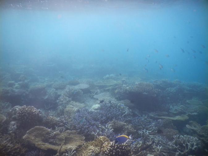 Maldives_snorkeling ocean_28
