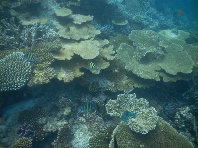 Maldives_snorkeling ocean_31