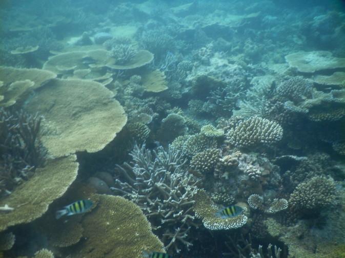Maldives_snorkeling ocean_32