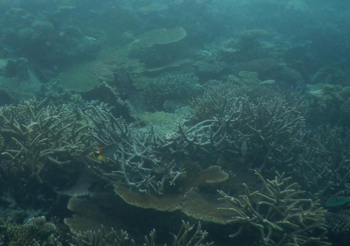 Maldives_snorkeling ocean_33