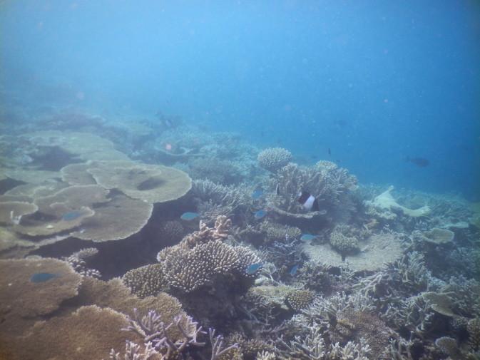 Maldives_snorkeling ocean_34