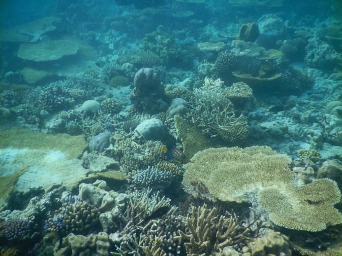 Maldives_snorkeling ocean_9