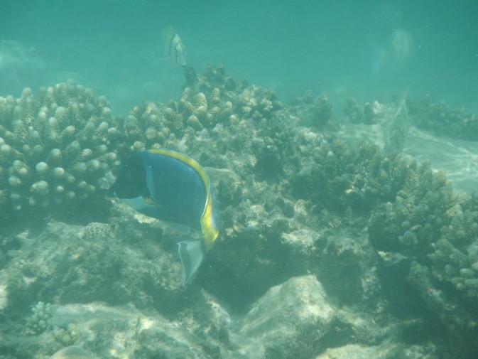 Maldives_snorkeling_Ellaidhoo resort_10