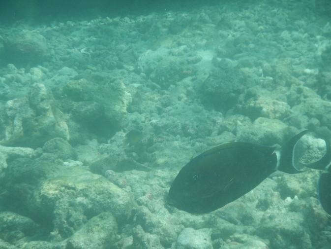 Maldives_snorkeling_Ellaidhoo resort_11