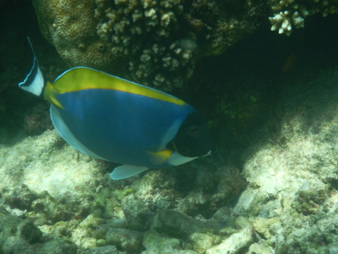 Maldives_snorkeling_Ellaidhoo resort_12