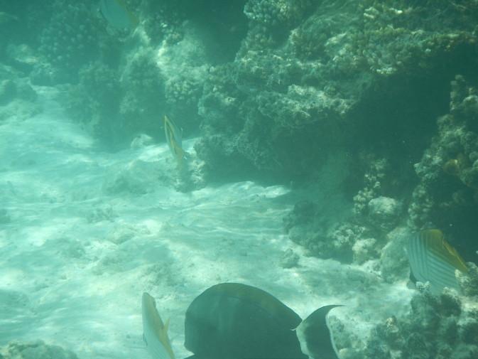 Maldives_snorkeling_Ellaidhoo resort_13