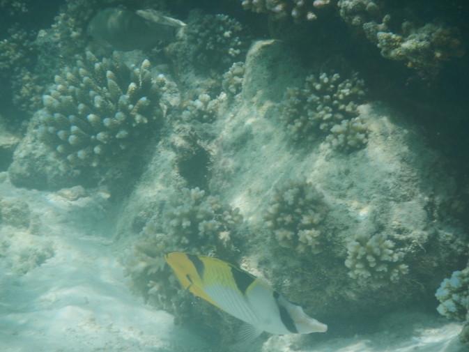 Maldives_snorkeling_Ellaidhoo resort_15