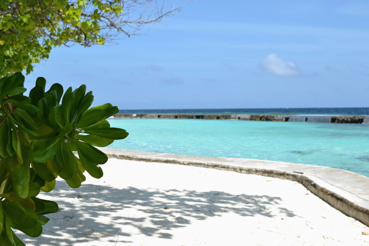 Maldives_snorkeling_Ellaidhoo resort_2